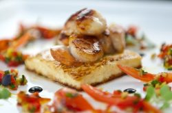 Seared Scallops, Haloumi, Tomato & Herb Salsa